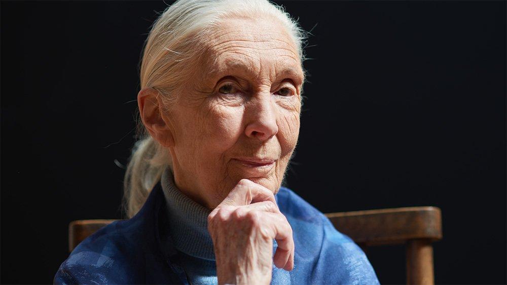 Naturalist Jane Goodall wins 2021 Templeton prize for life's work | പ്രകൃതിശാസ്ത്രജ്ഞനായ ജെയ്ൻ ഗുഡാൽ ജീവിതത്തിന്റെ പ്രവർത്തനത്തിന് 2021 ടെമ്പിൾട്ടൺ സമ്മാനം നേടി_40.1