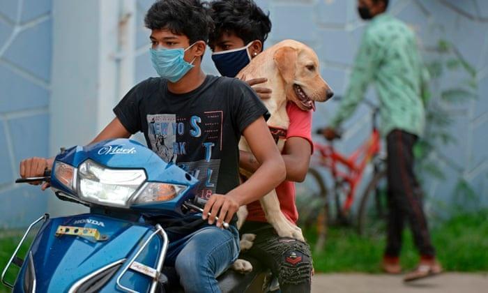 Goa becomes first state to go rabies free| റാബിസ് വിമുക്തമാകുന്ന ആദ്യത്തെ സംസ്ഥാനമായി ഗോവ മാറുന്നു_40.1