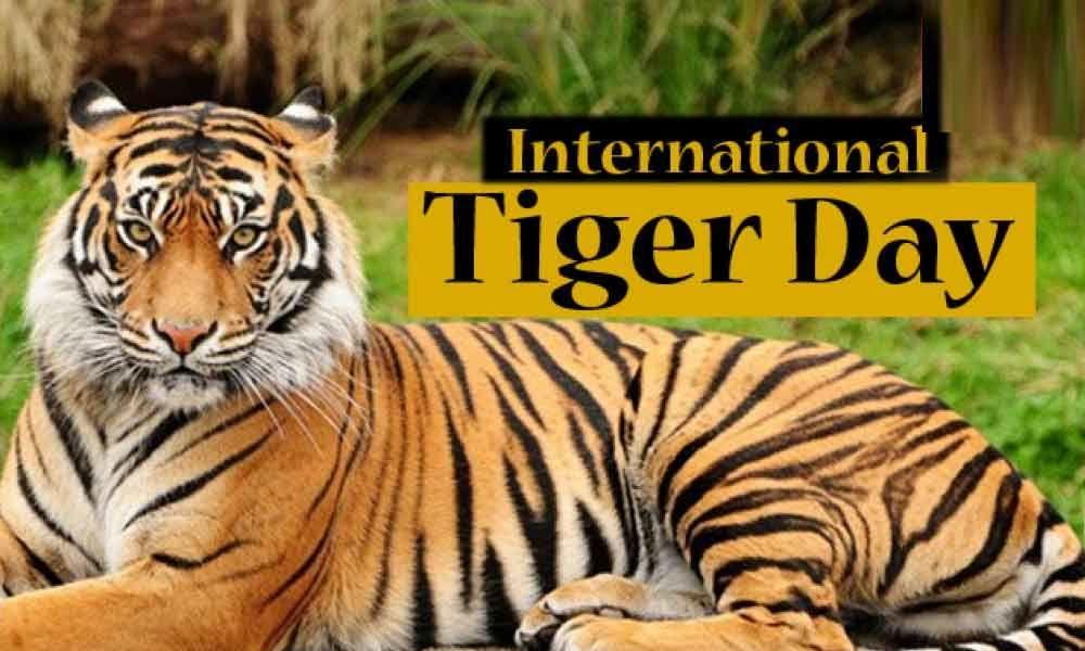 International Tiger Day: 29 July  അന്താരാഷ്ട്ര കടുവ ദിനം: ജൂലൈ 29_40.1