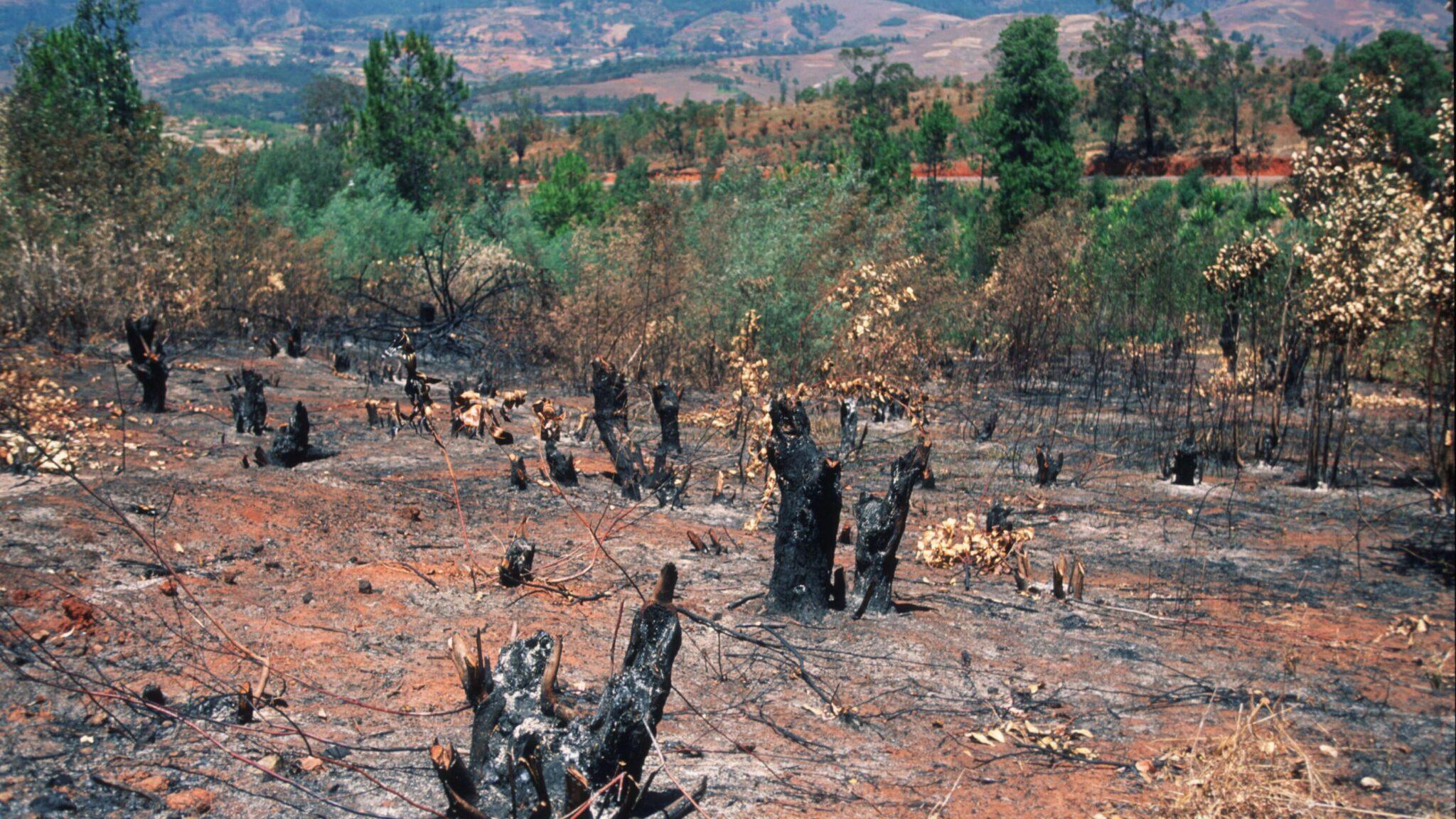സ്ലാഷ് ആന്റ് ബേൺ ഫാമിംഗ്(Slash and burn farming)_50.1