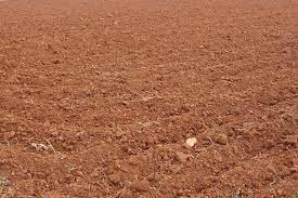 ഇന്ത്യയിലെ പല തരം മണ്ണുകൾ: വർഗ്ഗീകരണവും സവിശേഷതകളും(Soils of India: Classification and Characteristics)_60.1