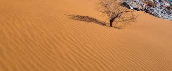 ഇന്ത്യയിലെ പല തരം മണ്ണുകൾ: വർഗ്ഗീകരണവും സവിശേഷതകളും(Soils of India: Classification and Characteristics)_100.1