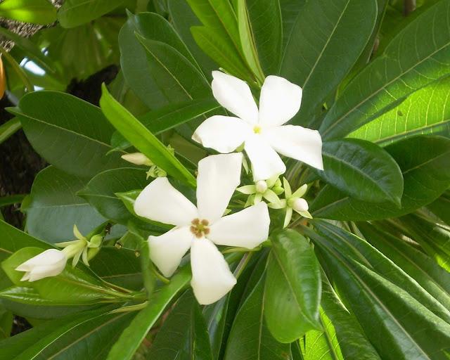 കൊല്ലാൻ കഴിയുന്ന ഇന്ത്യയിലെ 8 വിഷ സസ്യങ്ങൾ(8 Poisonous Plants In India That Can Kill)_60.1