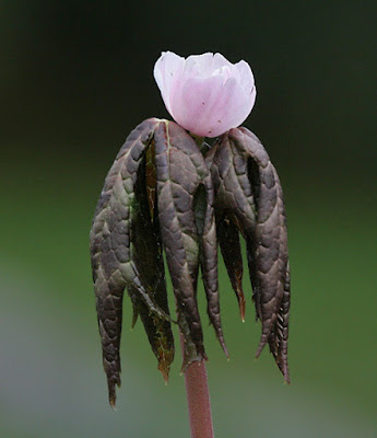 കൊല്ലാൻ കഴിയുന്ന ഇന്ത്യയിലെ 8 വിഷ സസ്യങ്ങൾ(8 Poisonous Plants In India That Can Kill)_120.1