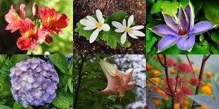 കൊല്ലാൻ കഴിയുന്ന ഇന്ത്യയിലെ 8 വിഷ സസ്യങ്ങൾ(8 Poisonous Plants In India That Can Kill)_40.1