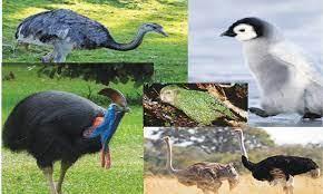 പറക്കാൻ കഴിയാത്ത 5 പക്ഷികൾ(5 birds that can't fly)_40.1