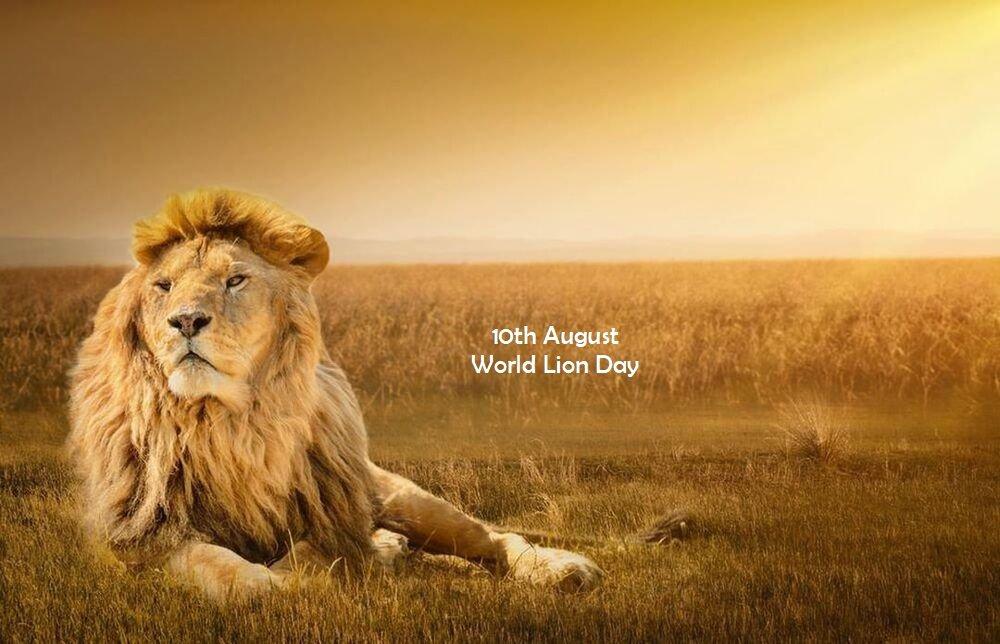 10 August: World Lion Day_40.1