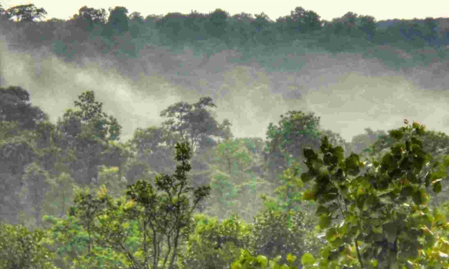 Chhattisgarh gave Forest Resource Rights in Urban Region_40.1