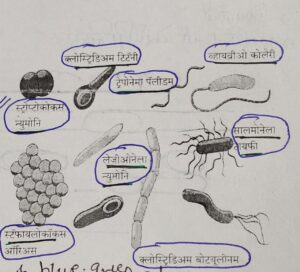 Classification of Living Organisms Part 1-Microorganisms and Plants_60.1