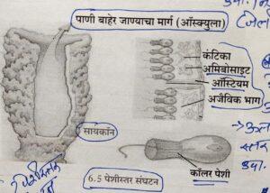 सजीवांचे वर्गीकरण भाग 2 - प्राणी | Classification of Living Organisms Part 2- Animals_70.1
