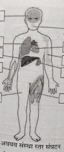 सजीवांचे वर्गीकरण भाग 2 - प्राणी | Classification of Living Organisms Part 2- Animals_100.1