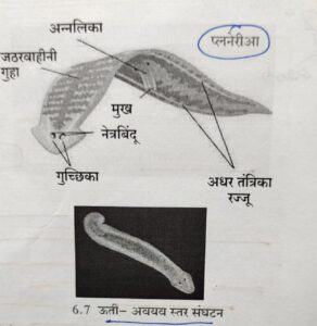 सजीवांचे वर्गीकरण भाग 2 - प्राणी | Classification of Living Organisms Part 2- Animals_90.1