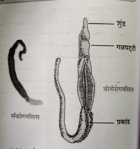 सजीवांचे वर्गीकरण भाग 2 - प्राणी | Classification of Living Organisms Part 2- Animals_200.1