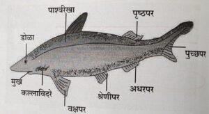 सजीवांचे वर्गीकरण भाग 2 - प्राणी | Classification of Living Organisms Part 2- Animals_240.1