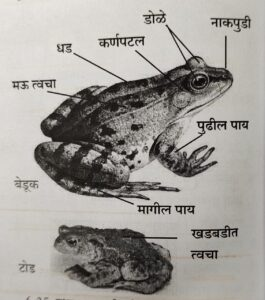 सजीवांचे वर्गीकरण भाग 2 - प्राणी | Classification of Living Organisms Part 2- Animals_250.1