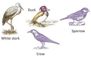 सजीवांचे वर्गीकरण भाग 2 - प्राणी | Classification of Living Organisms Part 2- Animals_270.1