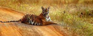 Forests in Maharashtra | महाराष्ट्रातील वने व वनांचे प्रकार आणि अभयारण्ये_60.1