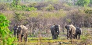 Forests in Maharashtra | महाराष्ट्रातील वने व वनांचे प्रकार आणि अभयारण्ये_110.1