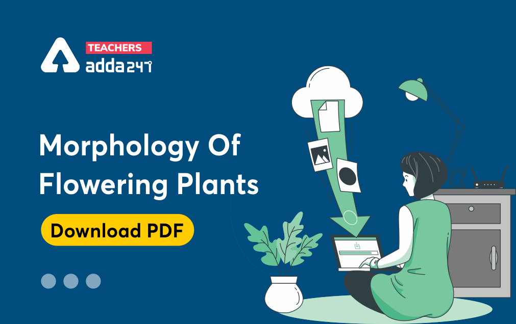 Morphology Of Flowering Plants : Download Science Study Notes FREE PDF For all Teaching Exam_20.1
