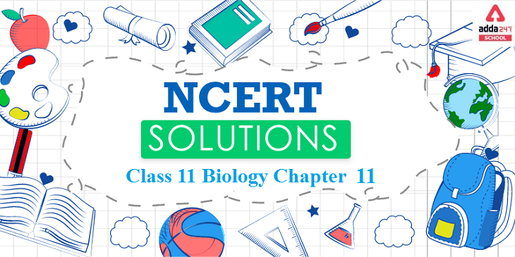 ncert solutions for class 11 Biology chapter 11