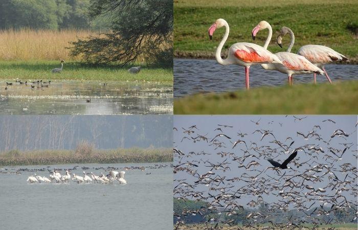 4 more sites in India added to Ramsar list   ভারতের আরও 4 টি সাইট রামসার তালিকায় যুক্ত হয়েছে_40.1
