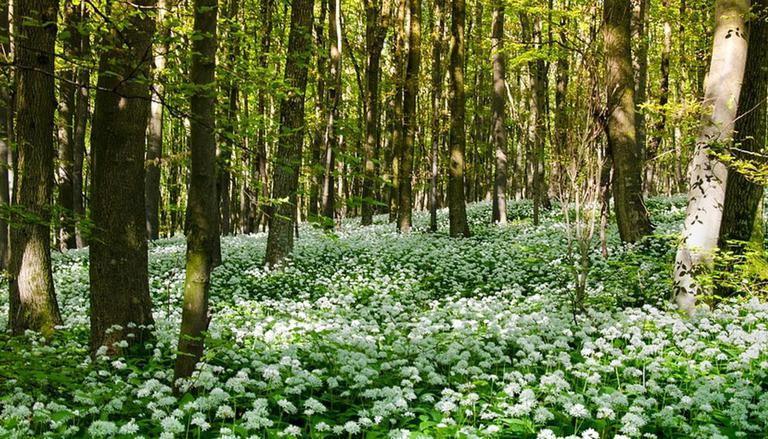 উত্তরাখণ্ডে ভারতের সর্বোচ্চ হার্বাল পার্কের উদ্বোধন করা হল   India's highest herbal park inaugurated in Uttarakhand_40.1