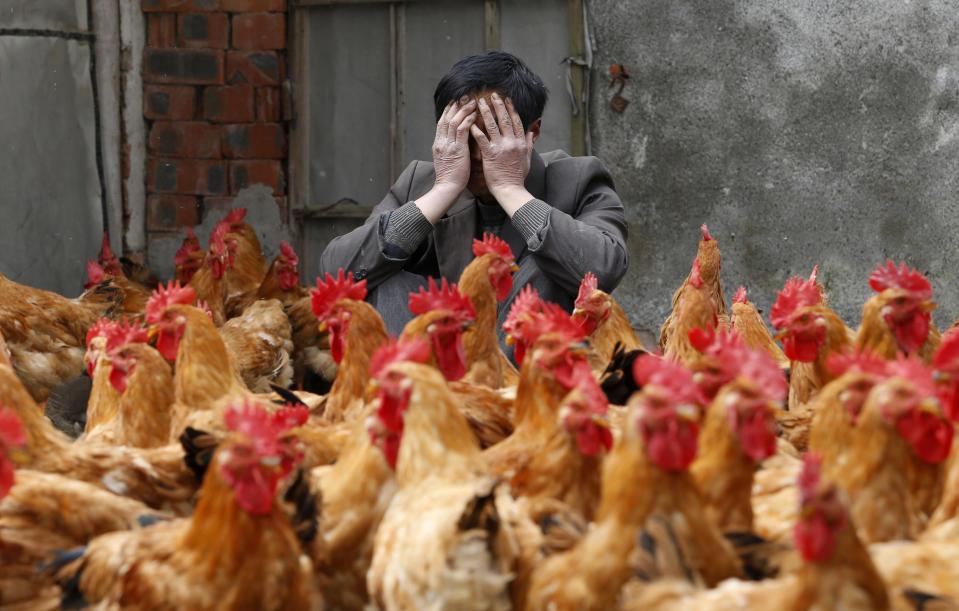 China reports first human case of H10N3 bird flu | H10N3 பறவைக் காய்ச்சலின் முதல் மனித வழக்கை சீனா தெரிவித்துள்ளது |_40.1