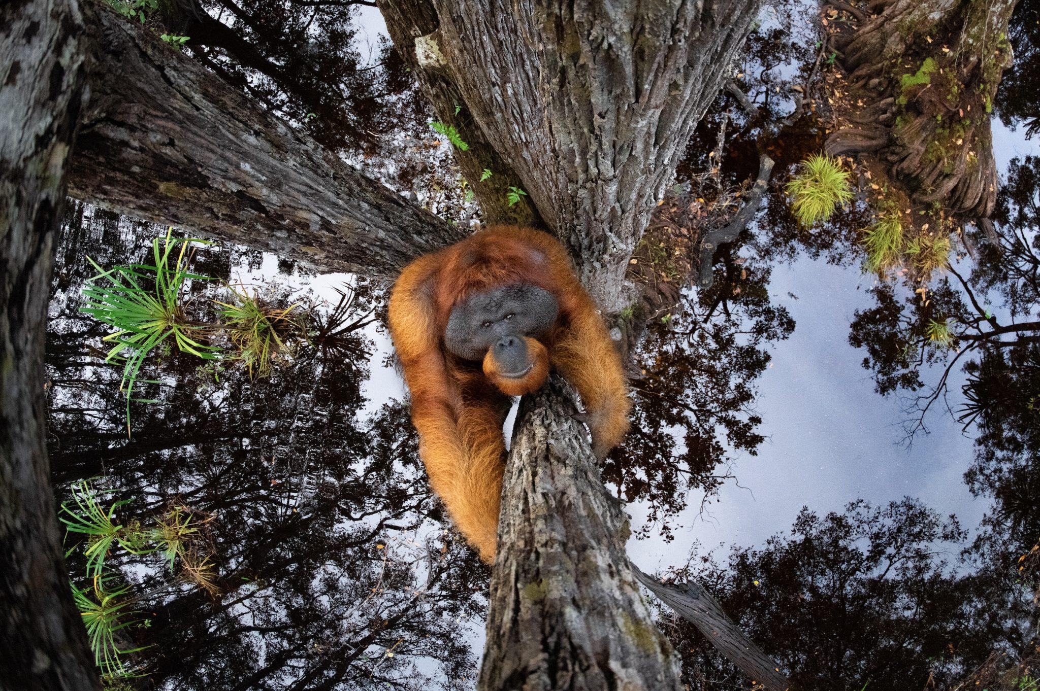 Thomas Vijayan Wins Nature TTL Photographer of the Year 2021 | தாமஸ் விஜயன் 2021 ஆம் ஆண்டின் இயற்கை TTL புகைப்படக் கலைஞர் விருதை வென்றார் |_40.1