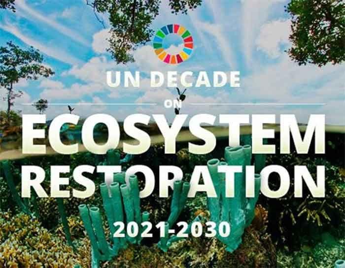 United Nations Decade on Ecosystem Restoration: 2021-2030 | சுற்றுச்சூழல் மறுசீரமைப்பு தொடர்பான ஐக்கிய நாடுகளின் தசாப்தம்: 2021-2030 |_40.1