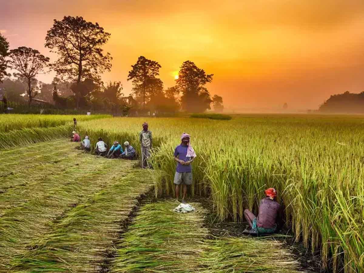 "Digital Platform ""Kisan Sarathi"" launched to facilitate farmers   விவசாயிகளுக்கு வசதியாக டிஜிட்டல் தளம் ""கிசான் சரதி"" தொடங்கப்பட்டது  _40.1"