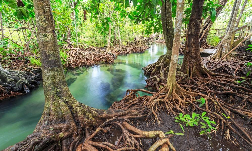 International Day for the Conservation of the Mangrove Ecosystem   சதுப்புநில சுற்றுச்சூழல் அமைப்பிற்கான சர்வதேச தினம்  _40.1