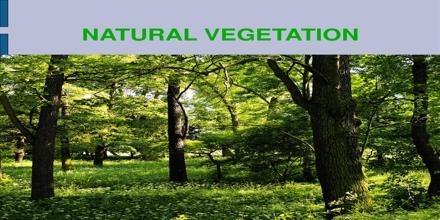 Types of forests in Tamil Nadu | தமிழ்நாட்டில் உள்ள காடுகளின் வகைகள் |_50.1