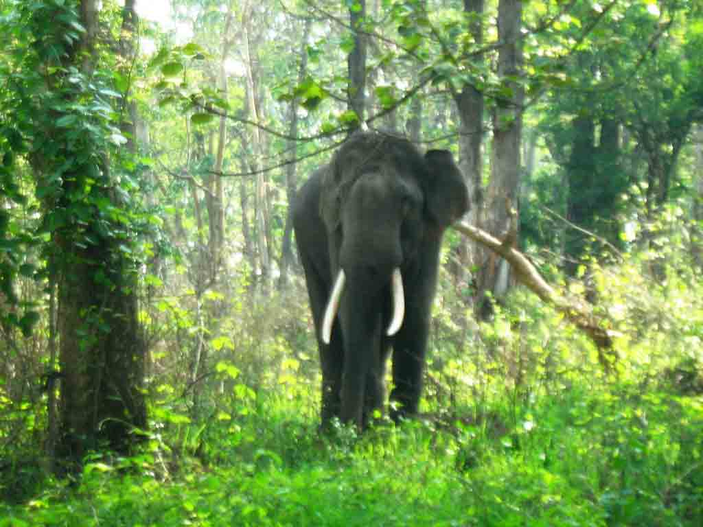 Types of forests in Tamil Nadu | தமிழ்நாட்டில் உள்ள காடுகளின் வகைகள் |_70.1