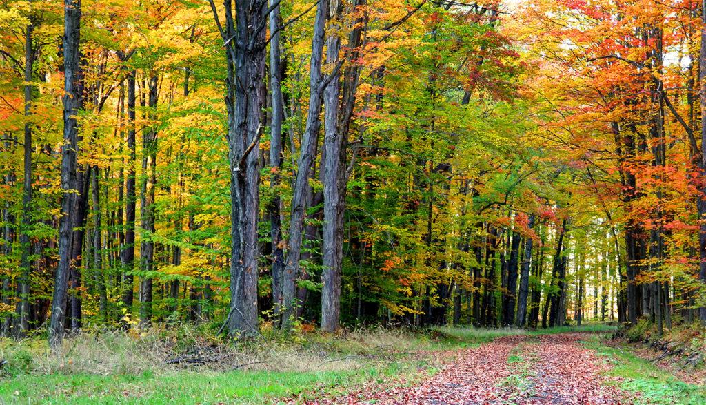 Types of forests in Tamil Nadu | தமிழ்நாட்டில் உள்ள காடுகளின் வகைகள் |_80.1