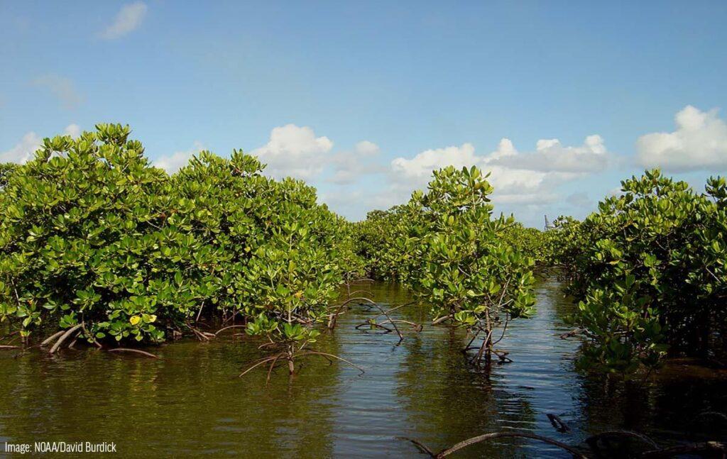 Types of forests in Tamil Nadu | தமிழ்நாட்டில் உள்ள காடுகளின் வகைகள் |_90.1