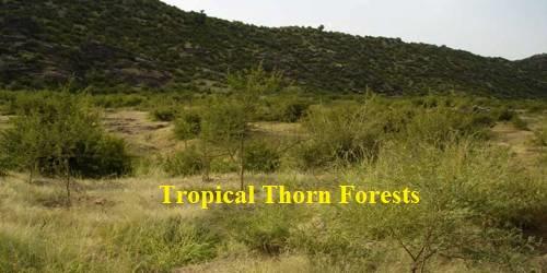 Types of forests in Tamil Nadu | தமிழ்நாட்டில் உள்ள காடுகளின் வகைகள் |_100.1