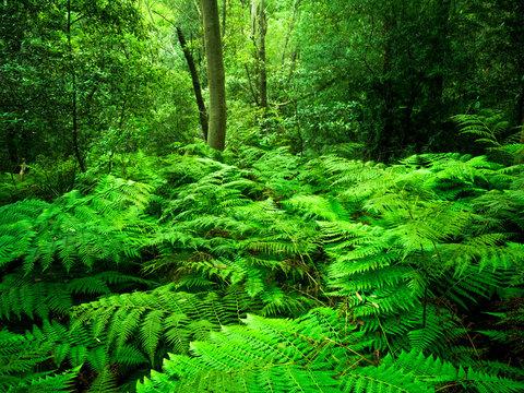 Types of forests in Tamil Nadu | தமிழ்நாட்டில் உள்ள காடுகளின் வகைகள் |_60.1