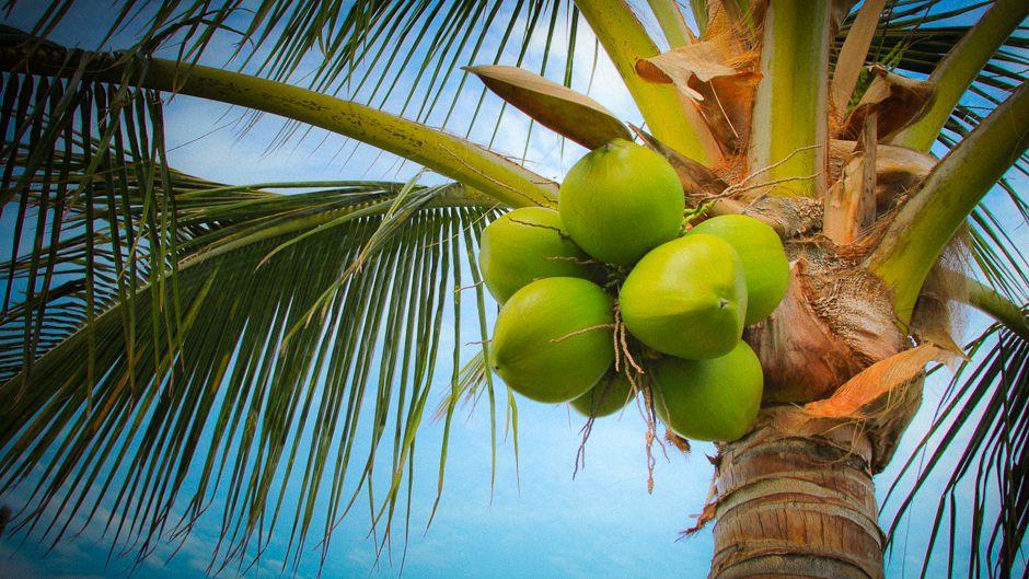 World Coconut Day 2021: 2 September | உலக தேங்காய் தினம் 2021 |_40.1