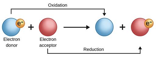 ஒடுக்க-ஏற்ற வேதிவினைகள் | Redox Reactions | TNPSC Group 2 and 2a |_50.1
