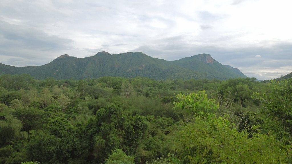 கிழக்குத் தொடர்ச்சி மலைகள் | The Eastern Ghats |_50.1