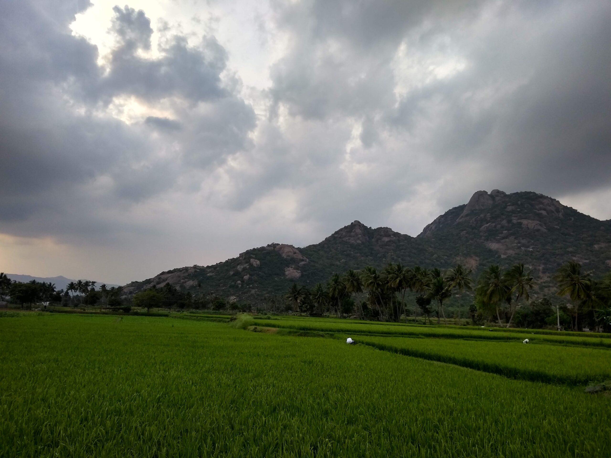 கிழக்குத் தொடர்ச்சி மலைகள் | The Eastern Ghats |_60.1