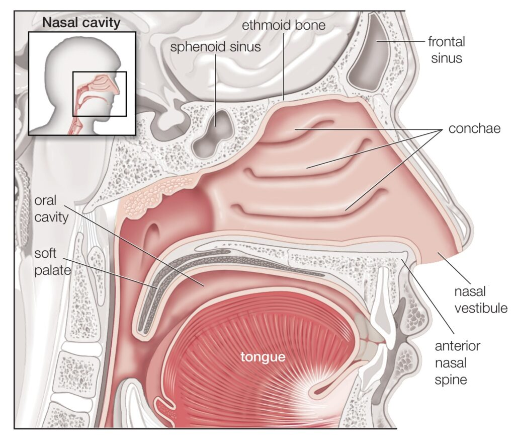 சுவாசத் தொகுதி | Respiratory System for TNPSC |_80.1