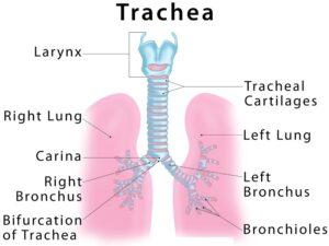 சுவாசத் தொகுதி | Respiratory System for TNPSC |_110.1