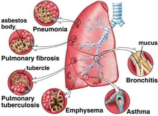 சுவாசத் தொகுதி | Respiratory System for TNPSC |_150.1