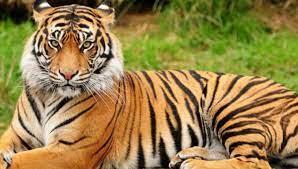 National Animal of India | இந்தியாவின் தேசிய விலங்கு |_50.1