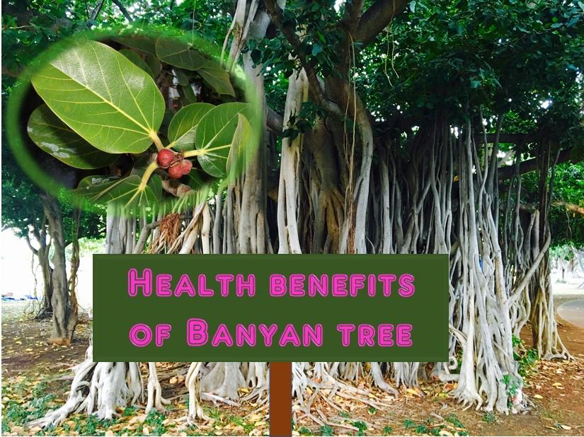 இந்தியாவின் தேசிய மரம் | National Tree of India for TNPSC |_60.1