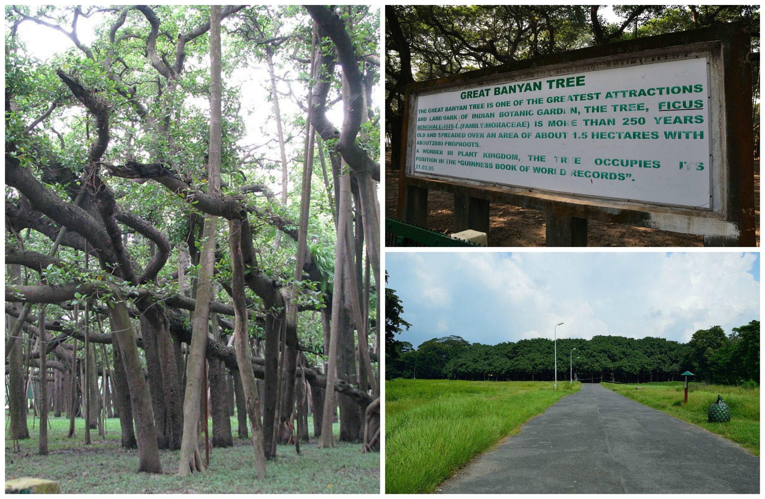 இந்தியாவின் தேசிய மரம் | National Tree of India for TNPSC |_70.1