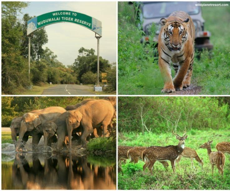 Famous tourist places in tamilnadu | தமிழ்நாட்டில் பிரபலமான சுற்றுலா இடங்கள் |_150.1