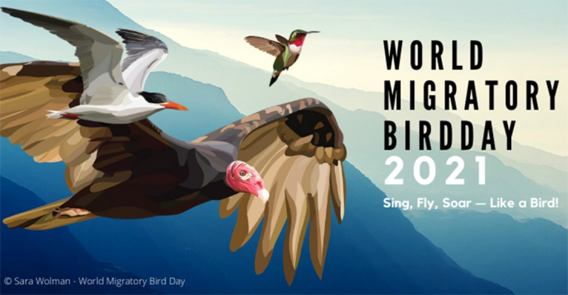 World Migratory Bird Day: 08 May   ప్రపంచ వలస పక్షుల దినోత్సవం: 08 మే  _40.1