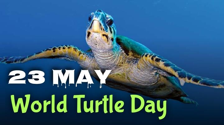 World Turtle Day celebrated on 23 May   ప్రపంచ తాబేళ్ల దినోత్సవం : 23 మే  _40.1